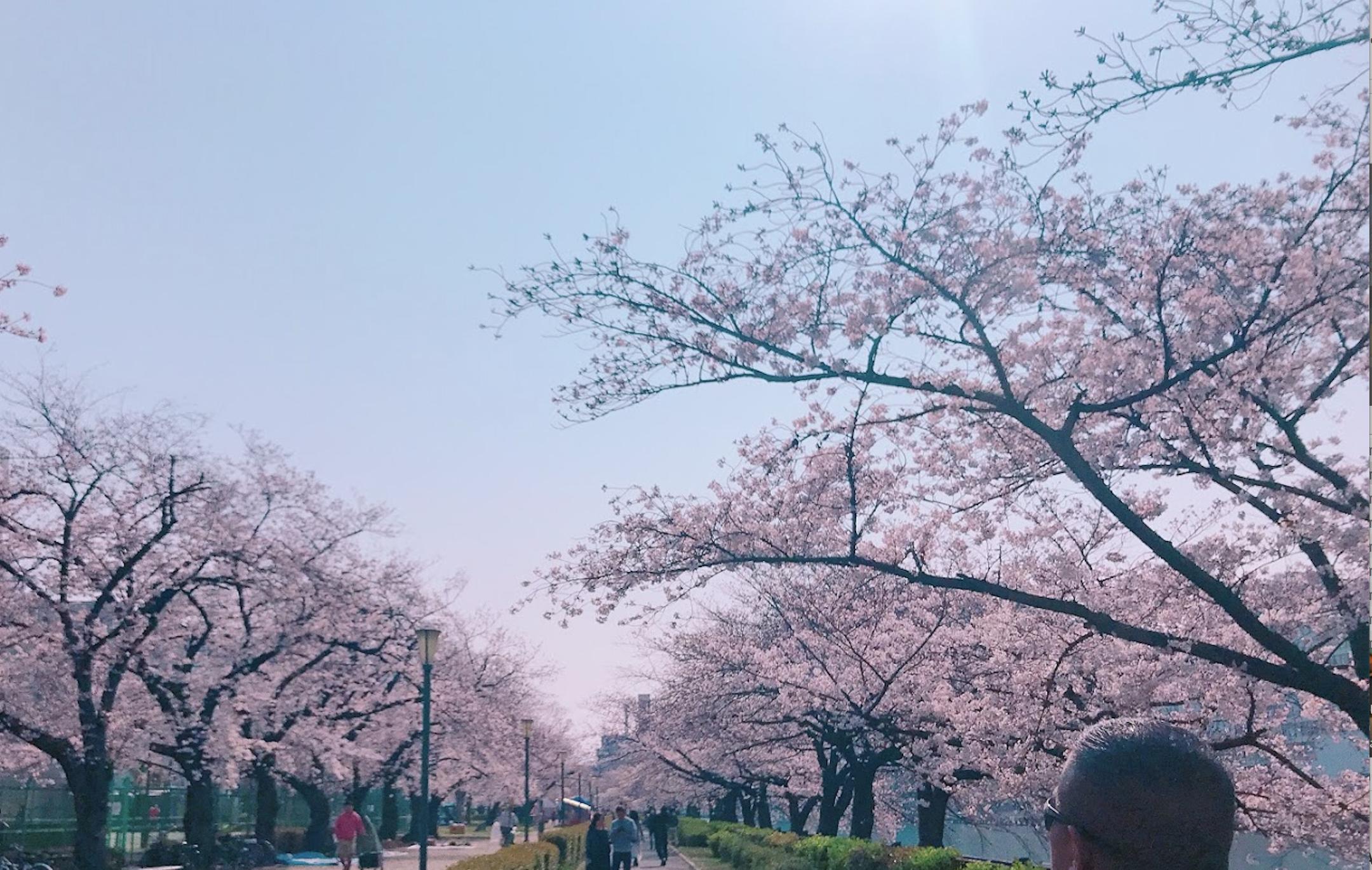 Screen Shot 2019-04-06 at 3.20.02 PM